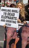 Peta_elephant_protest
